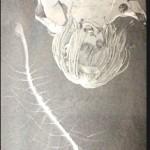 【進撃の巨人】ネタバレ122話考察!始祖ユミルまとめ正体を検証!いつ誕生?
